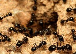 disinfestazione formiche per enti pubblici