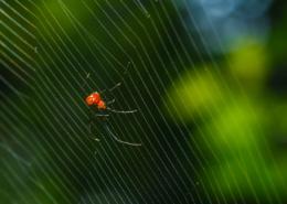 disinfestazione ragni e ragnatele per aziende