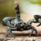 disinfestazione scorpioni per aziende