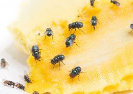 disinfestazione mosche per privati