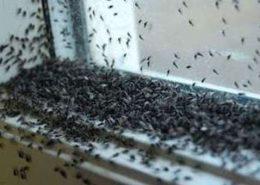 disinfestazione mosche per enti pubblici