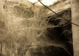disinfestazione ragni e ragnatele per enti pubblici